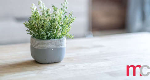 Improved Indoor Air Quality from House Plants