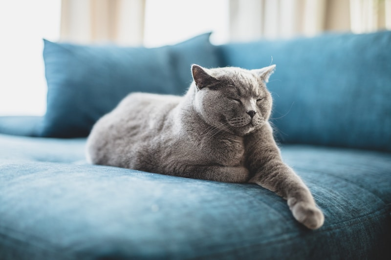 Keep your pets healthy with AC Cleaning Dubai